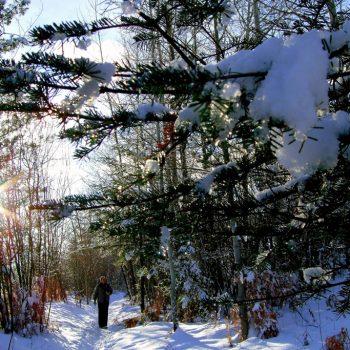 A Winter Walk in Warfield