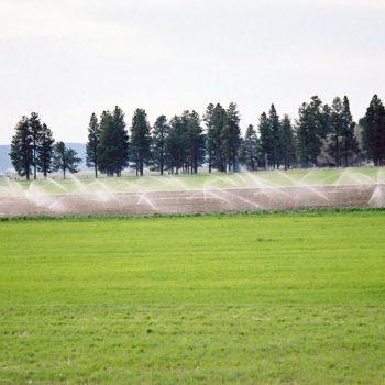 Sprinkling Crops