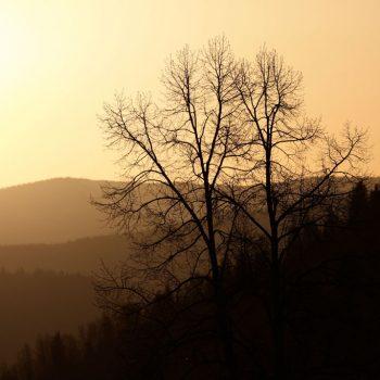 Warfield Fall Sunset