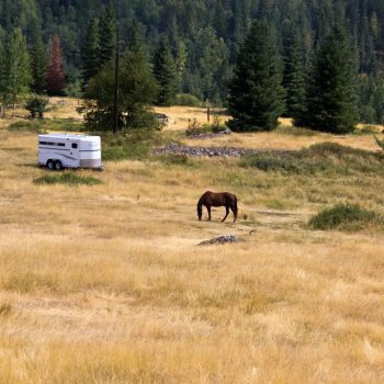 Warfield Horse in Pasture