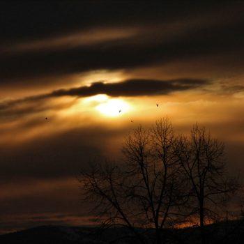 Warfield Sunrise with Birds