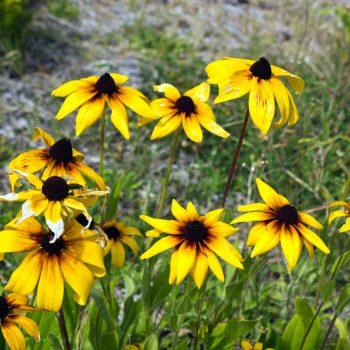 Warfield Village Office Flowers