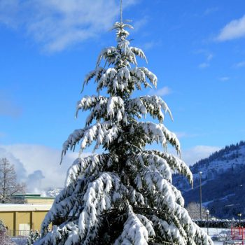 Warfield Winter Scene