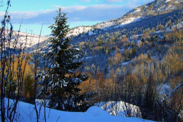 Village of Warfield - Winter Message