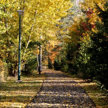 Warfield Arnold Lauriente Way in the Fall